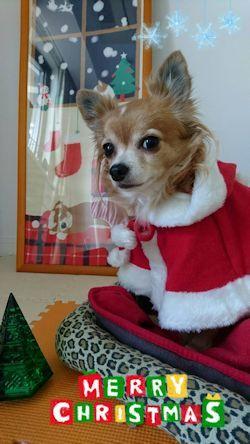 christmas!.jpg